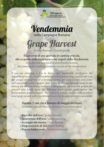 Vendemmia - Grape Harvest